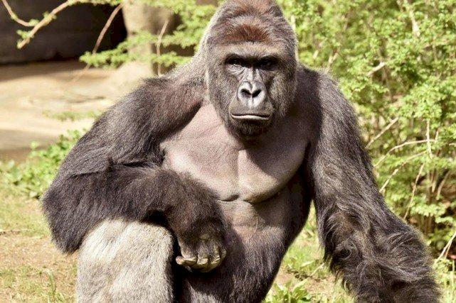 Nord Kivu : Le Parc de Virunga fermé au tourisme jusqu'en 2019