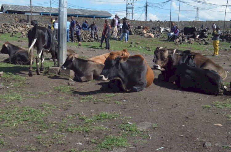 Affaire vaches volées dans la ferme Kasuku, qui est derrière?