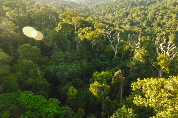 FORÊT : POLITIQUE FORESTIÈRE ET REVUE LÉGALE DES TITRES FORESTIERS OÙ EN SOMMES-NOUS ?