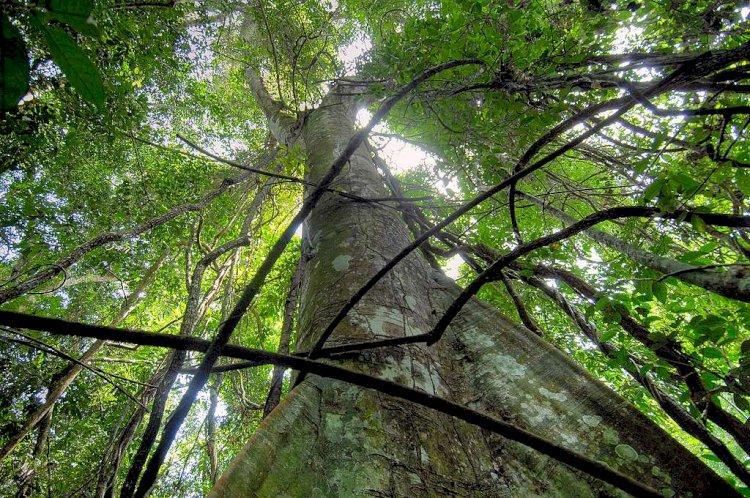 Environnement : Greenpeace Afrique invite Eve Bazaiba à démontrer un nouvel élan en respectant les lois congolaises et les obligations internationales de la RDC